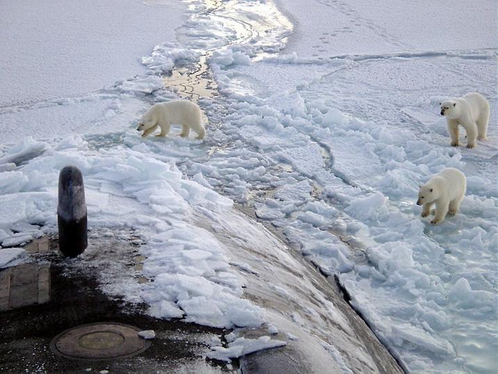 Eisbrenbeschnupperneinatomuboot