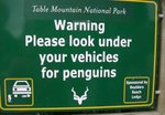 noch pinguine unter dem auto