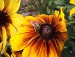 Tag 07 - 003 Biene im Garten